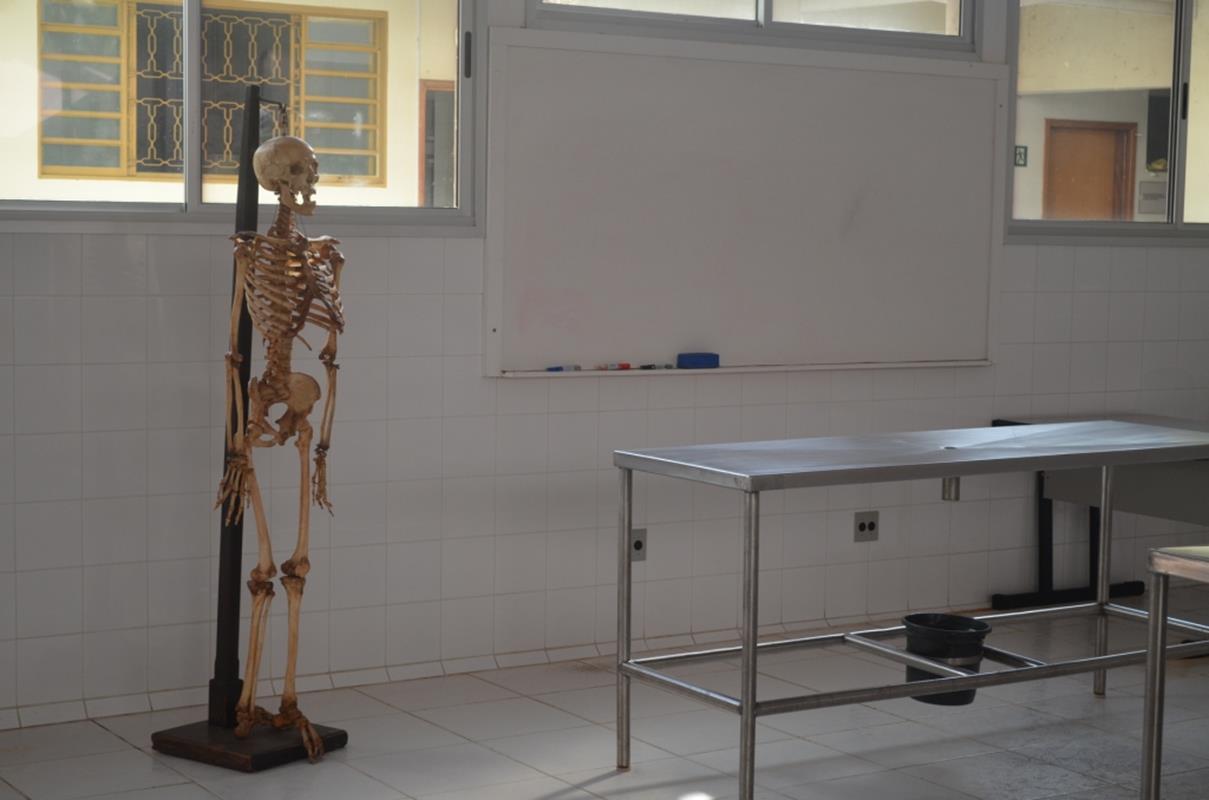 Anatomia Humana II