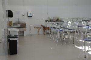 Laboratório de Anatomia Animal