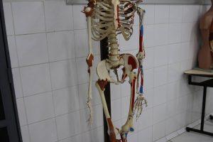 Laboratório de Anatomia II